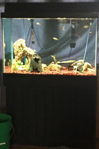 Looking to sell my 60 gallon  fish tank