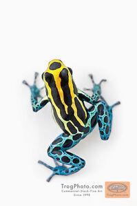 Tank w/ R. ventrimaculata Poison Dart Frogs