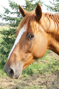 Looking for a project horse?