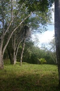 Hobby Farm for sale Cayo District Belize