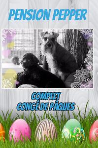 Pension pour Petits chiens en milieu familial Rive-Sud