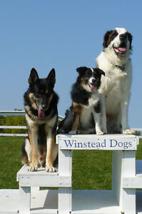Dog Boarding at Winstead Dogs