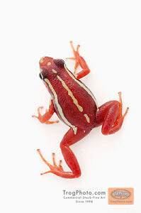 E. Tricolor Poison Dart Frogs with Tank