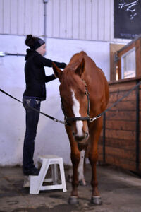 Equine Massage Therapy- serving Southwestern Ontario for 5 years