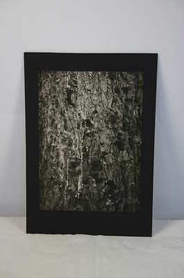 """Sklarek: experimentelles Foto betitelt """"Kiefer"""" 1928"""