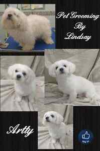 January Special ! Professional dog and cat grooming  Cambridge Kitchener Area image 4