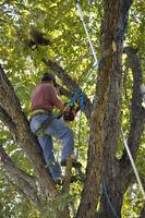 ALL AROUND TREE SERVICE