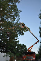 TREE TRIMMING for Elm Trees and more!
