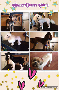 Jazzy Puppy Cuts professional pet grooming.