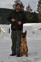 Canine Obedience and Protection Training