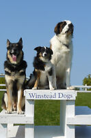 Basic Obedience - Meet & Greet at Winstead Dogs
