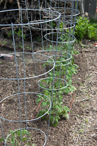 Wanted to Buy - tomato cages