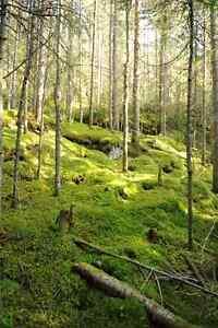 J'ai surement un terrain qui vous conviendra a votre besoin Saguenay Saguenay-Lac-Saint-Jean image 3