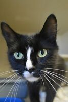 Marge-Oromocto and Area SPCA