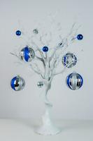 White Manzanita Trees for rent