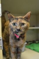 Gingersnap-Oromocto and Area SPCA