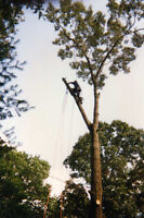 AFFORDABLE TREE CUTTING SERVICES