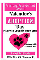 Precious Pets Animal Rescue  Adoption Events this weekend
