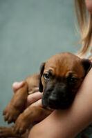 Love Animals?  Volunteers WANTED!