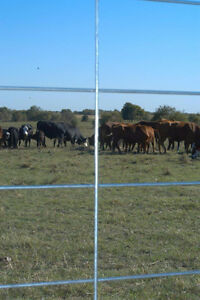 WELDED WIRE MESH PANELS for CATTLE/SHEEP/GOATS/HOGS/CHICKENS ETC Regina Regina Area image 2