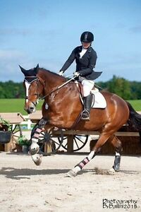 17.3 clyde/tb cross for partboard in newmarket