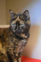 Pixie-Oromocto and Area SPCA
