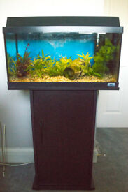 Aquarium with stand, fish, plants and accessories