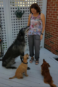 New Family Puppy Training Class in Cambridge