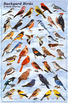 Backyard Birds Educational Science Chart Poster Poster Print  24X36
