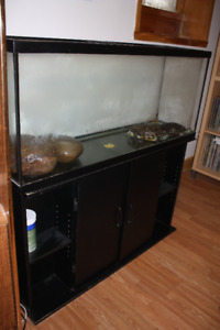 Turtles + tank + furniture sale/Tortues +réservoir + meubles