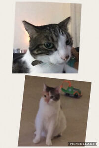 Foster(s) needed for two months