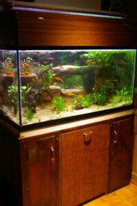 Aquarium 120 gallons