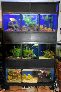 Full Aquarium Display tanks set up nine tanks in one