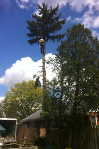 Tip Top Tree Removals and Services Cambridge Kitchener Area image 7