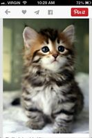 Looking! Pair of fluffy kittens :)