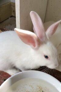 Adorable young rabbits