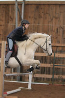 Large Pony Jumper Available for Partboard