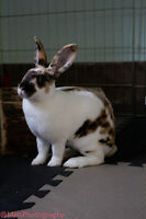 Grass hay/ meadow hay bale for rabbits