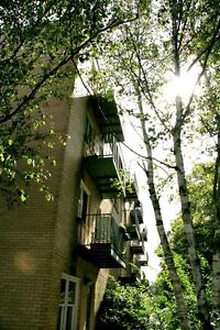 1 BDRM APT-JUBILEE&WALNUT-8 MNTH LSE (SEPT TO MAY)-AVAIL SEPT 1!