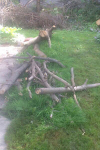 Tons of clean and free firewood for pickup London Ontario image 1