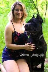 Beccas_photography fall deal!! Stratford Kitchener Area image 4