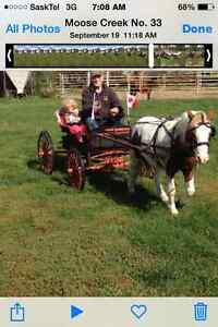 Pinto Pony For Sale Regina Regina Area image 2