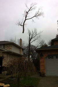 Tip Top Tree Removal and Services Kitchener / Waterloo Kitchener Area image 1