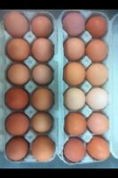 Farm fresh eggs.