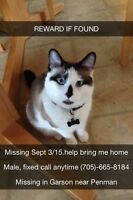MISSING MALE SNOWSHOE, GARSON *POSSIBLE SIGHTING*