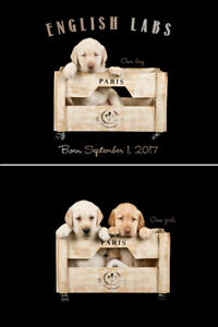 Beautiful ENGLISH LAB Puppies FOR SALE!!!