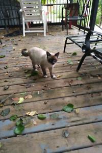 Found Male cat