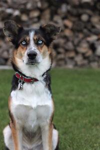 Pet Sitting & Dog Walking Available Windsor Region Ontario image 1