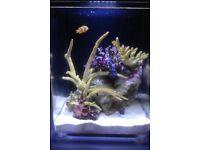 marine/ reef aquarium 13 litres