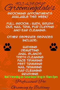 Pet Groomer with open appointments!
